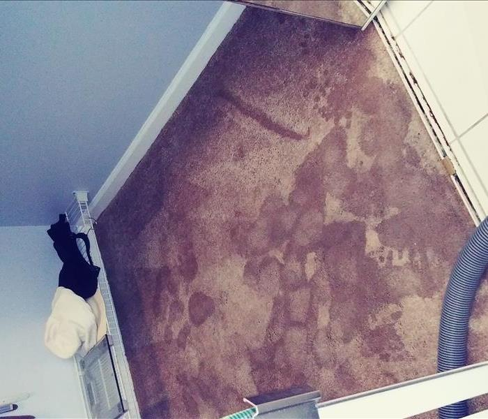 Carpet wet because a water damage