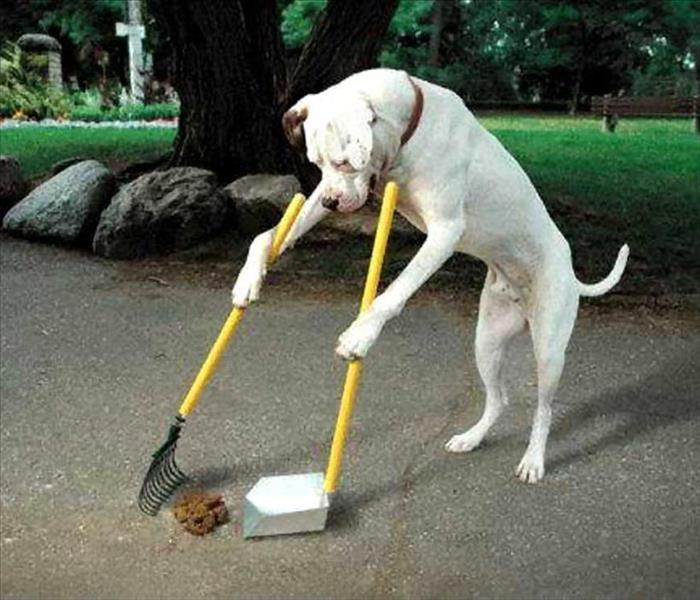 General Why Pick Up Dog Poop? The Dangers of Dog Feces